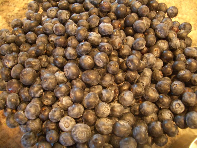 Pic_1_freshblueberries